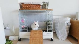 うさぎの飼育コーナーの画像
